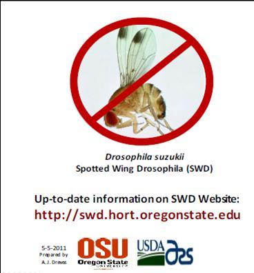 Spotted Wing Drosophila educational card