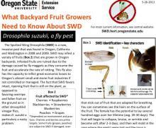 spotted wing drosophila information backyard fruit growers